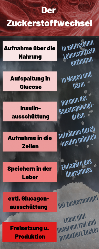 Der Zuckerstoffwechsel auf koerperfett-analyse.de